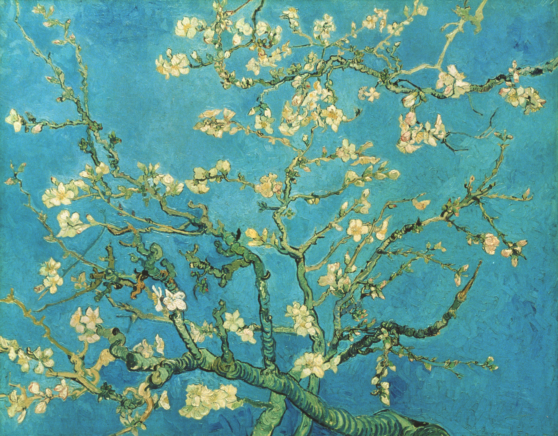 S0147742 Branch of an Almond Tree in Blossom. 1890. Image licenced to Karolina Skupien National Gallery of Canada by Karolina Skupien Usage : - 2000 X 2000 pixels © Art Resource, NY / Art Resource
