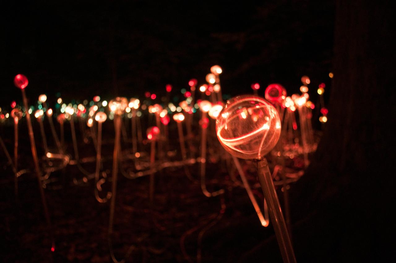 Bruce Munro's light work at Longwood Gardens