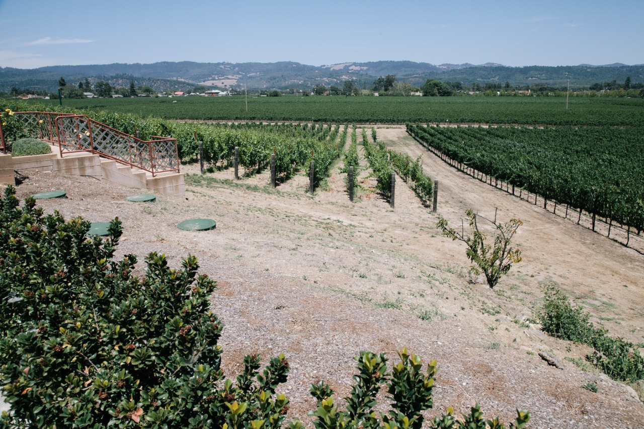 vineyard photography travel